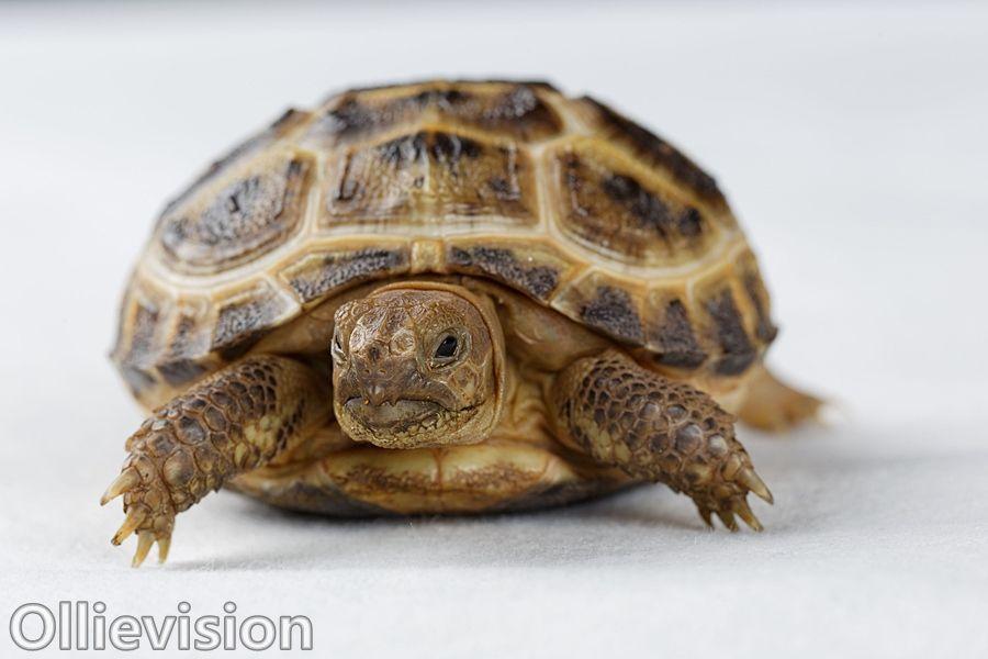 Pet photographer Leeds - Tortoise Power!